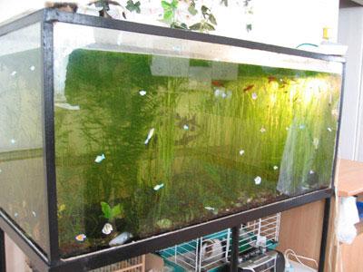 Своими руками бескаркасного аквариума