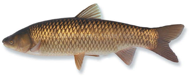 http://fish.kiev.ua/images/thumbnail.jpg
