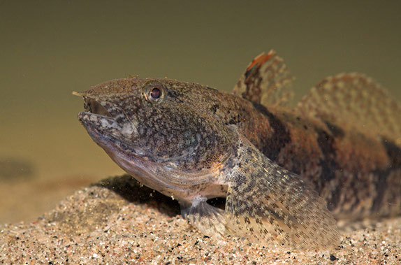 Озерно-речные рыбы постоянно живут и нерестятся в реках и озерах.